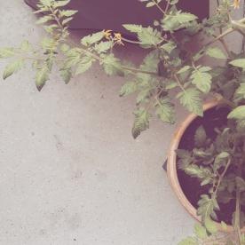 Der Balkon ist frisch und der Grill heiß – Sommer in München_5
